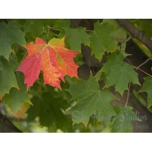 Autumn's First