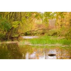 Woodland Stream One