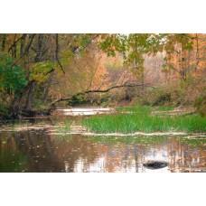 Woodland Stream Two